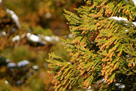 花粉が原因で起こる肌荒れの正体は「花粉(症)皮膚炎」